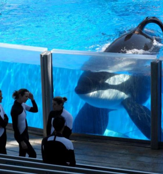 Did SeaWorld learn nothing from Hobby Lobby's social media debacle?